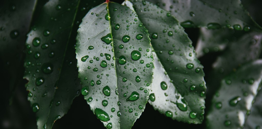 Rain Leaves